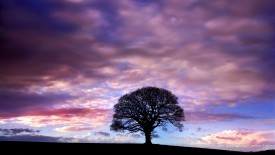 Lone Tree of Twilight, Bassenthwaite, Cumbria, England